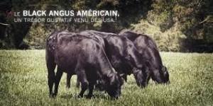 Black Angus Américain